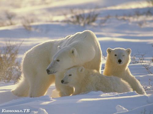 Зимние фото животных (99 фото) (1 часть)