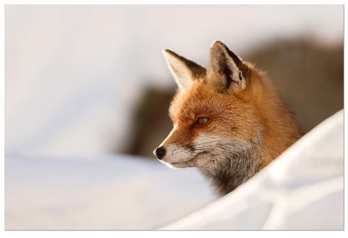 Животный мир глазами Stefano Ronchi (54 фото)
