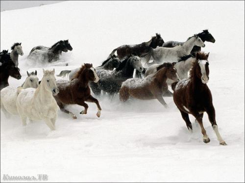 Зимние фото животных (101 фото) (2 часть)