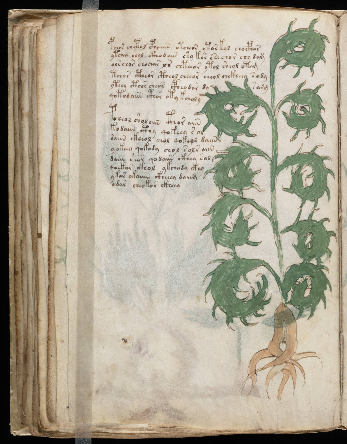 the voynich manuscript essay The voynich manuscript is produced from new photographs of the entire original and accompanied by expert essays that invite anyone to understand and explore the enigma many call the fifteenth-century codex, commonly known as the voynich manuscript, the world s most mysterious book.