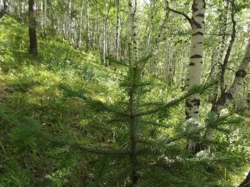 Красота леса (38 фото)
