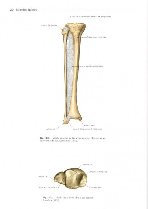 Эндрю Лумис   Andrew Loomis   Creative Illustration, Figure drawing worth, Anatomy for artists (659 работ)