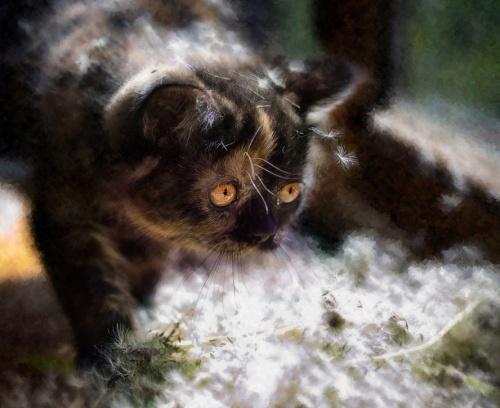 Фотограф Наталья Кузнецова (Nateletro) - Котята (123 фото)