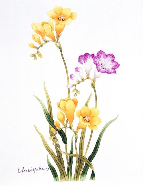 Японский художник Ibaragi Yoshiyuki (54 работ)