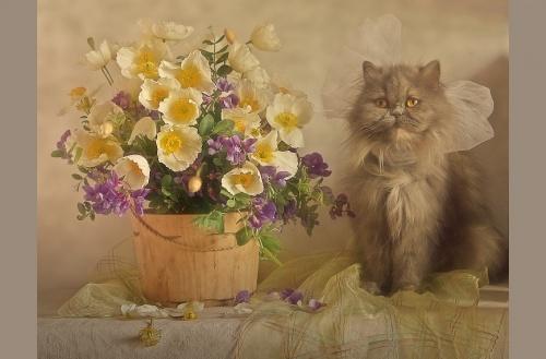 Натюрморты от фотографа под ником Anitta (100 фото)
