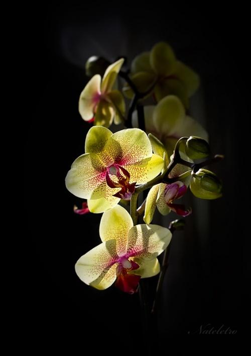 Фотограф Наталья Кузнецова (Nateletro) - Цветы (66 фото)