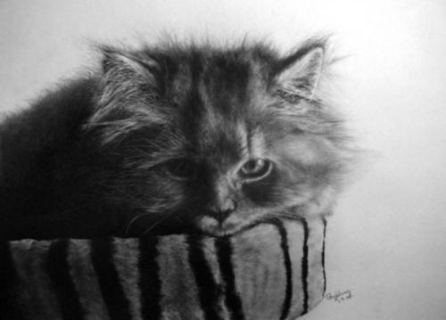 Paul Lung невероятно реалистичные рисунки карандашом (28 работ)
